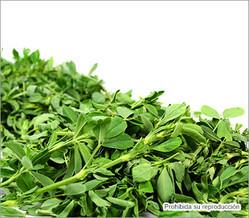 propiedades del alfalfa para adelgazar