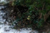 昨日降った雪が木の根元に残る、宝塚市です。