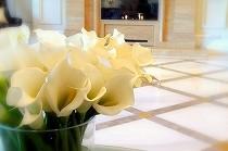 真っ白なカラーの花。 花嫁さんの象徴です。