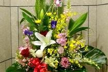 迎春を寿ぐ花々。