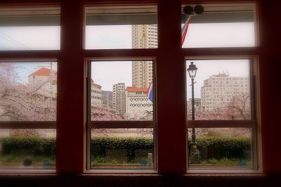 宝塚南口のタイ料理店「マイタイ」の室内からの眺め。満開のしだれ桜。宝塚音楽学校。宝塚大劇場が見えます。