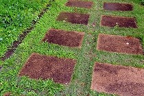 神宮外苑の石畳です。雨に濡れた敷石とまわりの緑の草との対比が美しい。