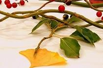 お茶会のテーブルに飾られた秋の風景。色づいた木の葉や木の実が秋の風情です。