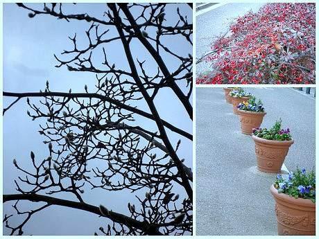 宝塚「花の道」に春を告げる植物たち。