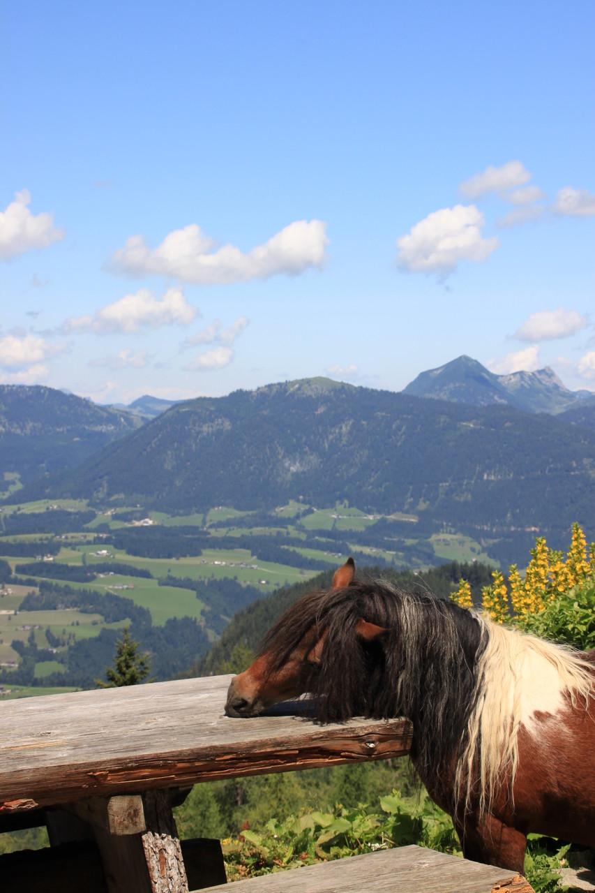 da frisst ein Pferd vom Tisch ...