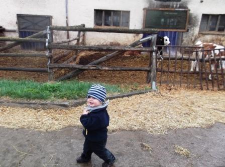 Unser Emil freut sich über die vielen Tiere.