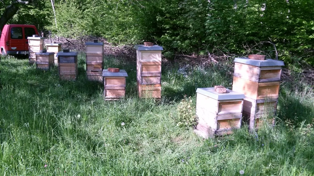 Bienenstand im Steigerwald