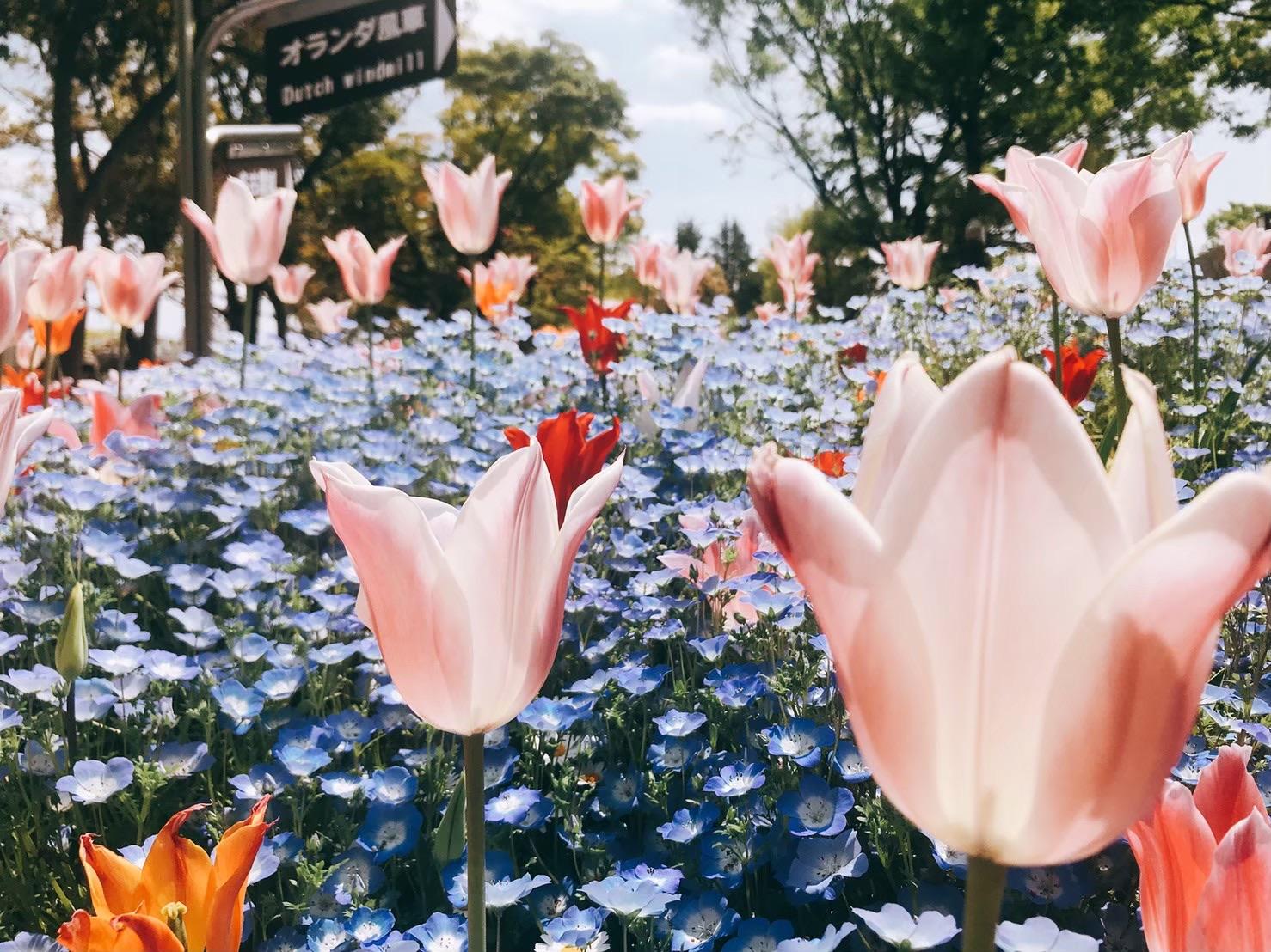 名城公園にはお花も緑もたくさん🌷🌷🌷