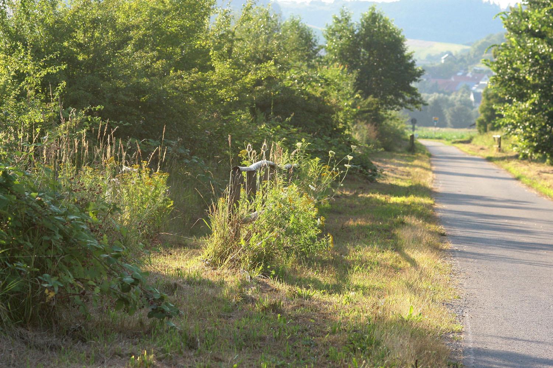 Hecke am Radweg (Foto: Stefanie Beyer)