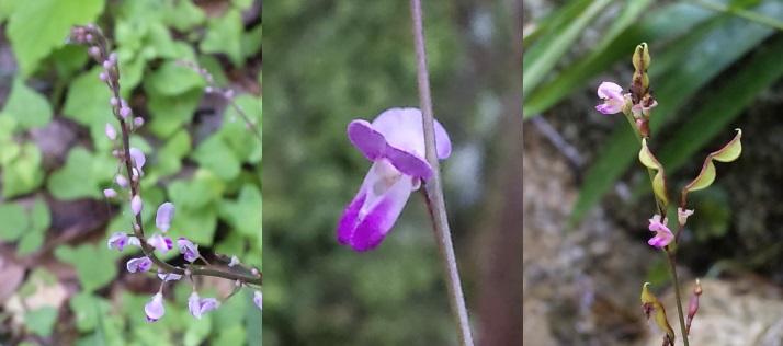 29、ヌスビトハギの花 ( ひっつきむし )