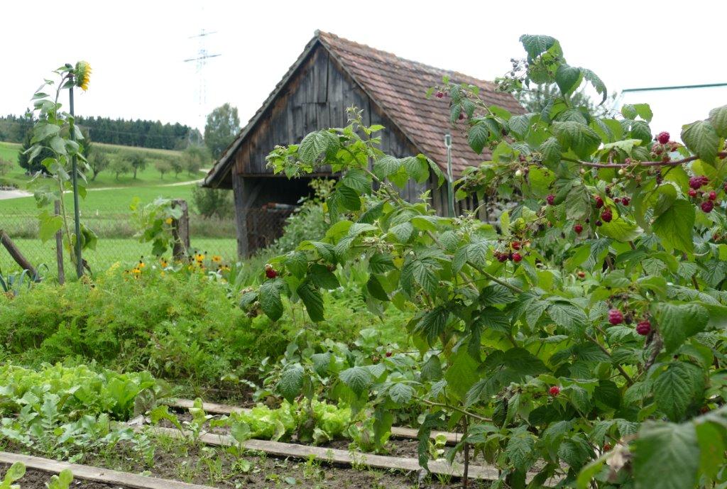 1. Platz: Gemüsegarten von Fr. Huber in Essendorf