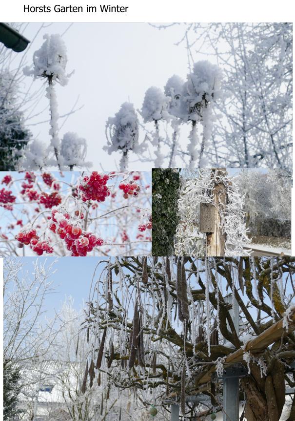 Horsts Garten im Winter