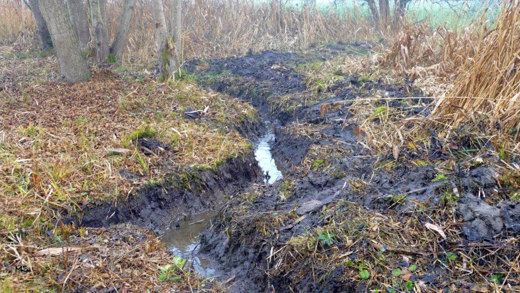 Graben zur Entwässerung der Niedermoorwiese