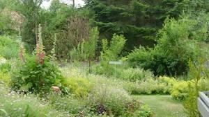 2. Platz: Frau Schneiders Hausgarten in Altheim und