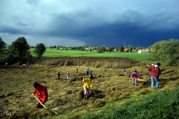 Mäharbeiten an der Feuchtwiese in Oberweiler