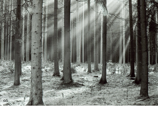 Im Altheimer Wald