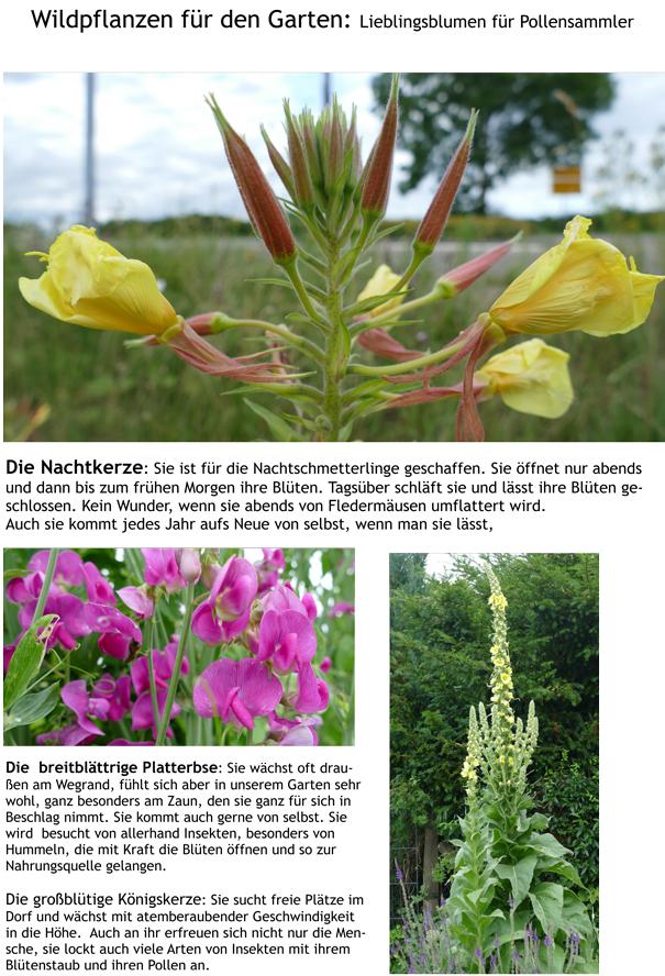 Lieblingsblumen für Pollensammler