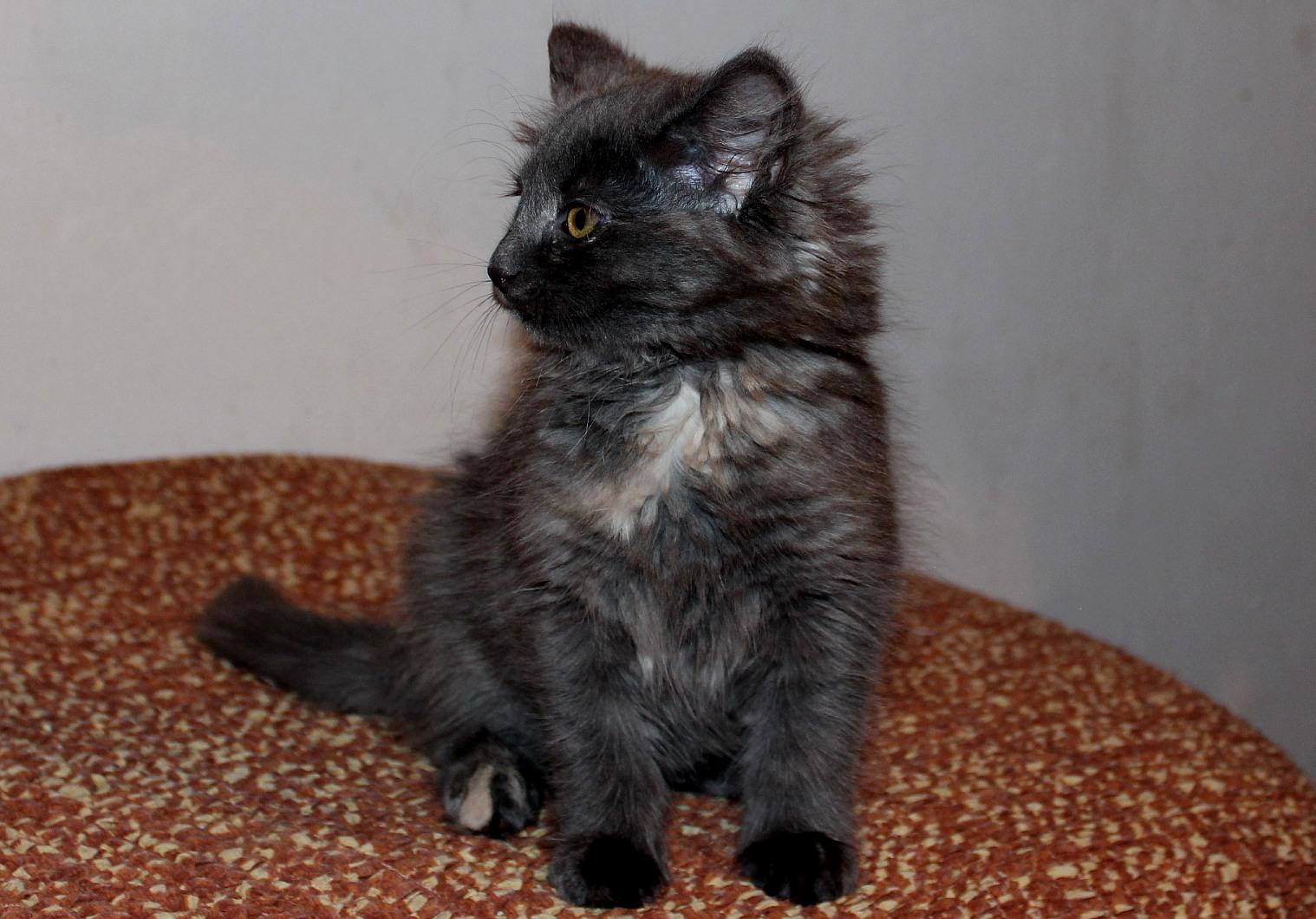 Galathea 10 Wochen alt