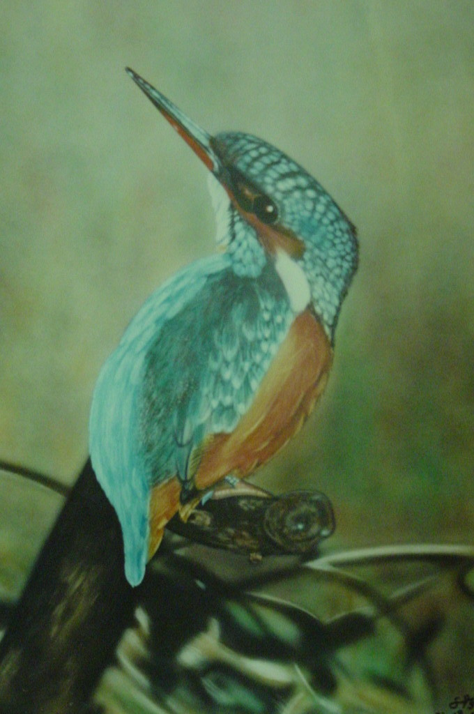 "Airbrush Wandbild ""Eisvogel"""