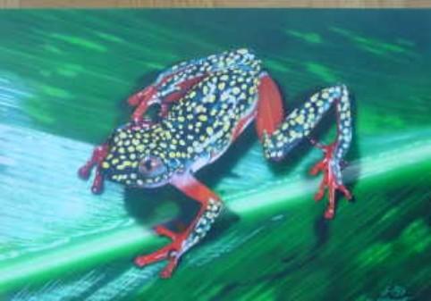 "Airbrush Wandbild ""Frosch"""