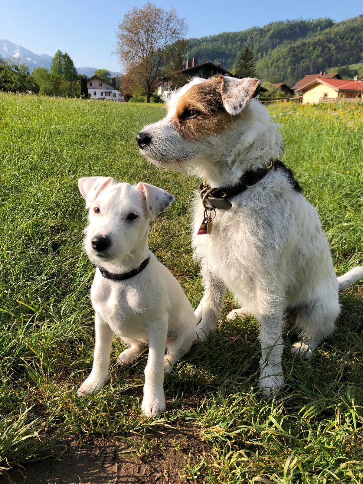 ---- Frieda zieht zu ihrem grossen Bruder Carlo