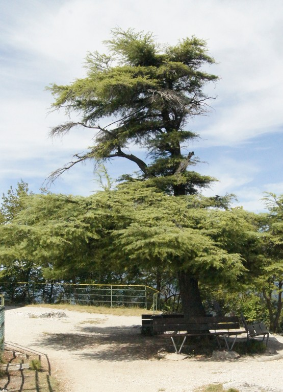Gipfelbaum San Solvatore (TI) [Foto MWü]