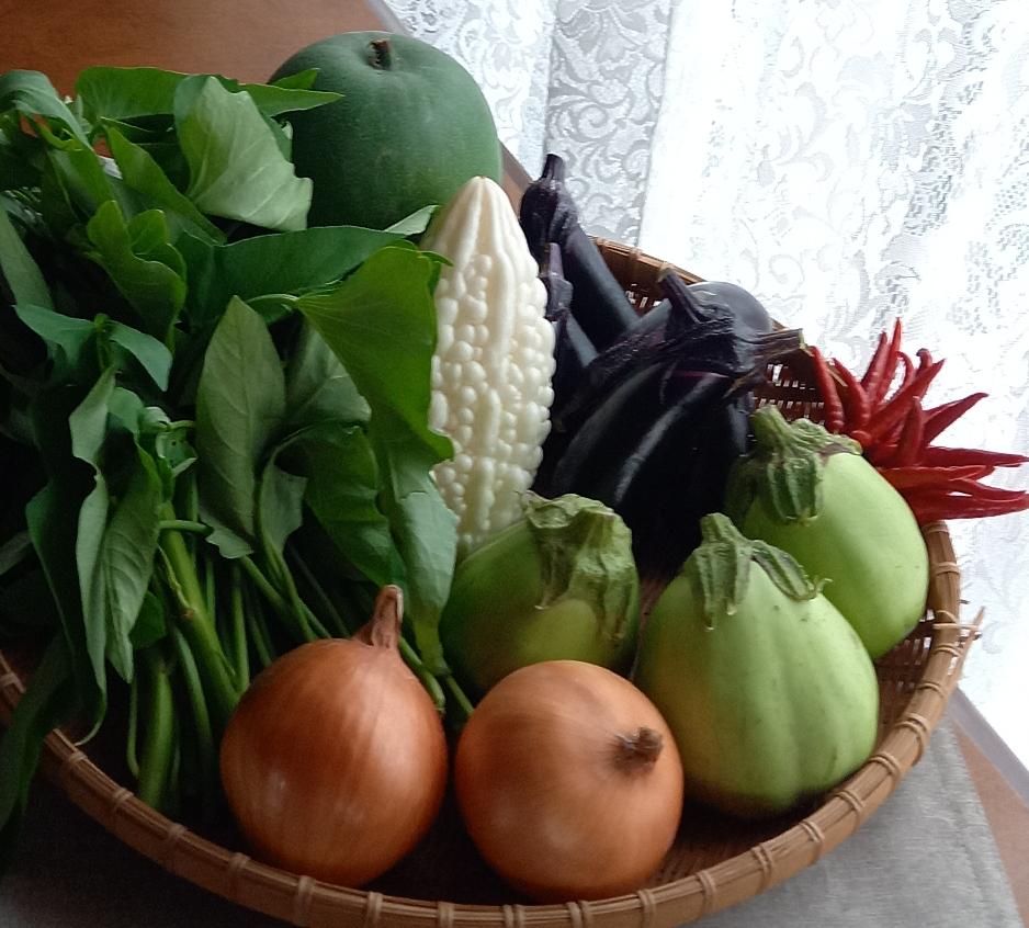 農薬、化学肥料を使わずに草の酵素を使って元氣な野菜を育ててます