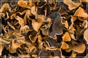 Vitalpilz Auricularia für Haustiere