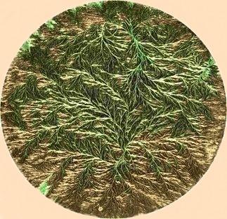 Kupferchloridkristallisationsbild: Backfermentbrot