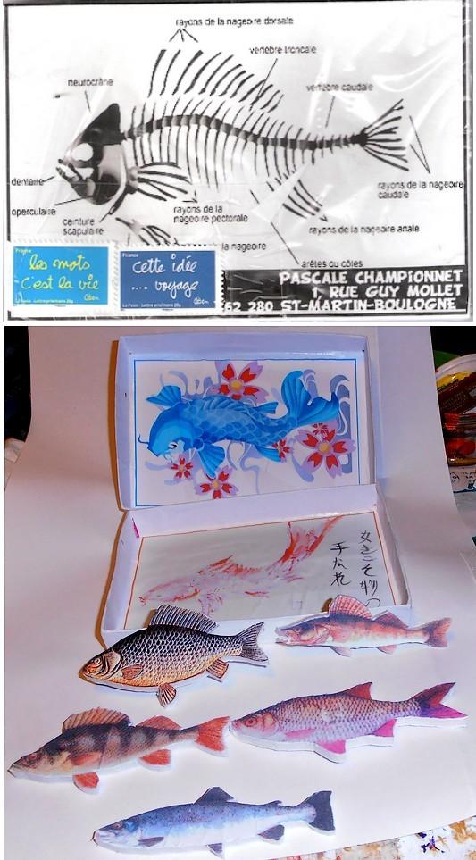les poissons sont collés sur des feuilles de rodhoïd transparent fichées dans une plaque de carton plume...