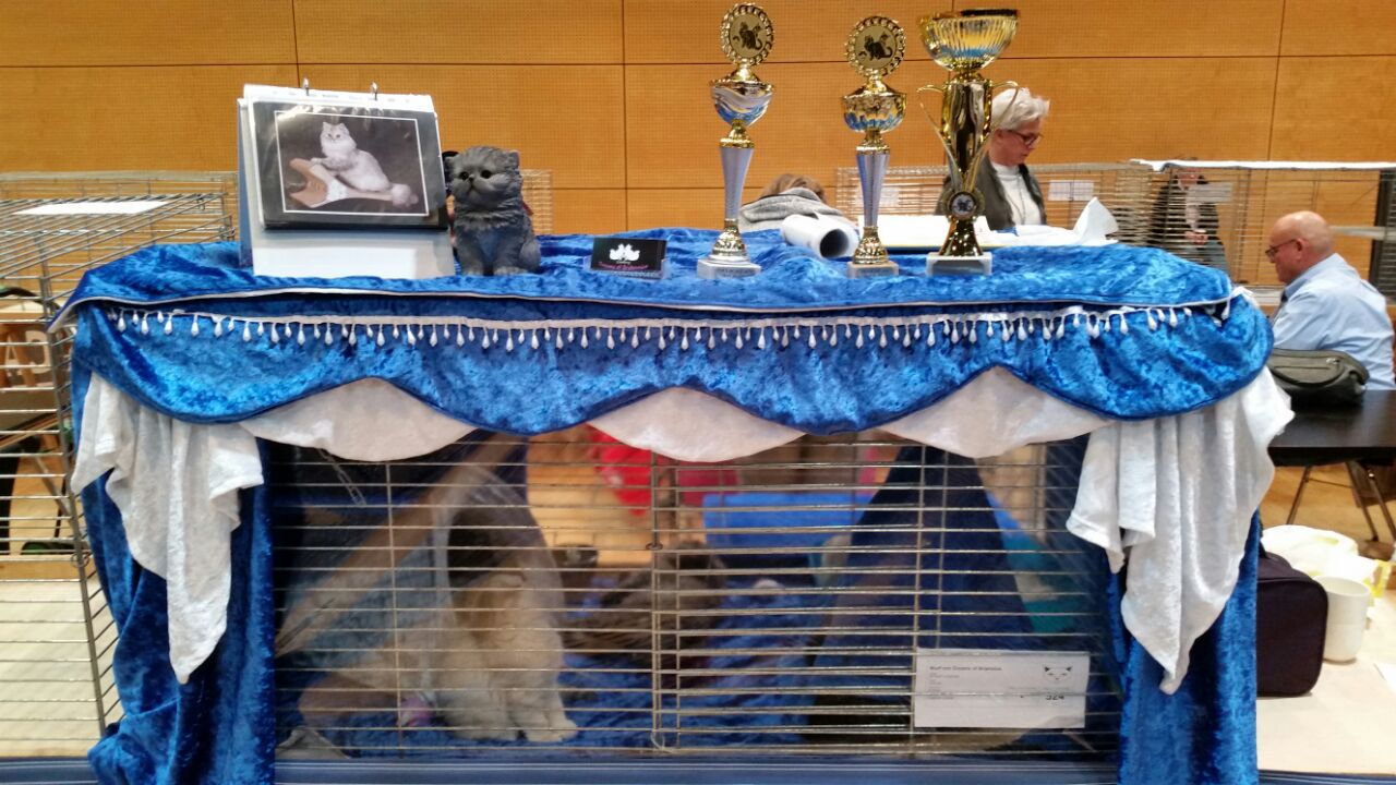 Katzenausstellung in Gifhorn vom 26.11.17
