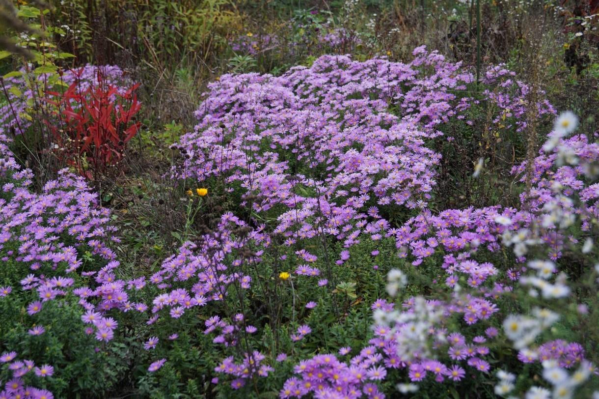 Herbstblumen im Garten...