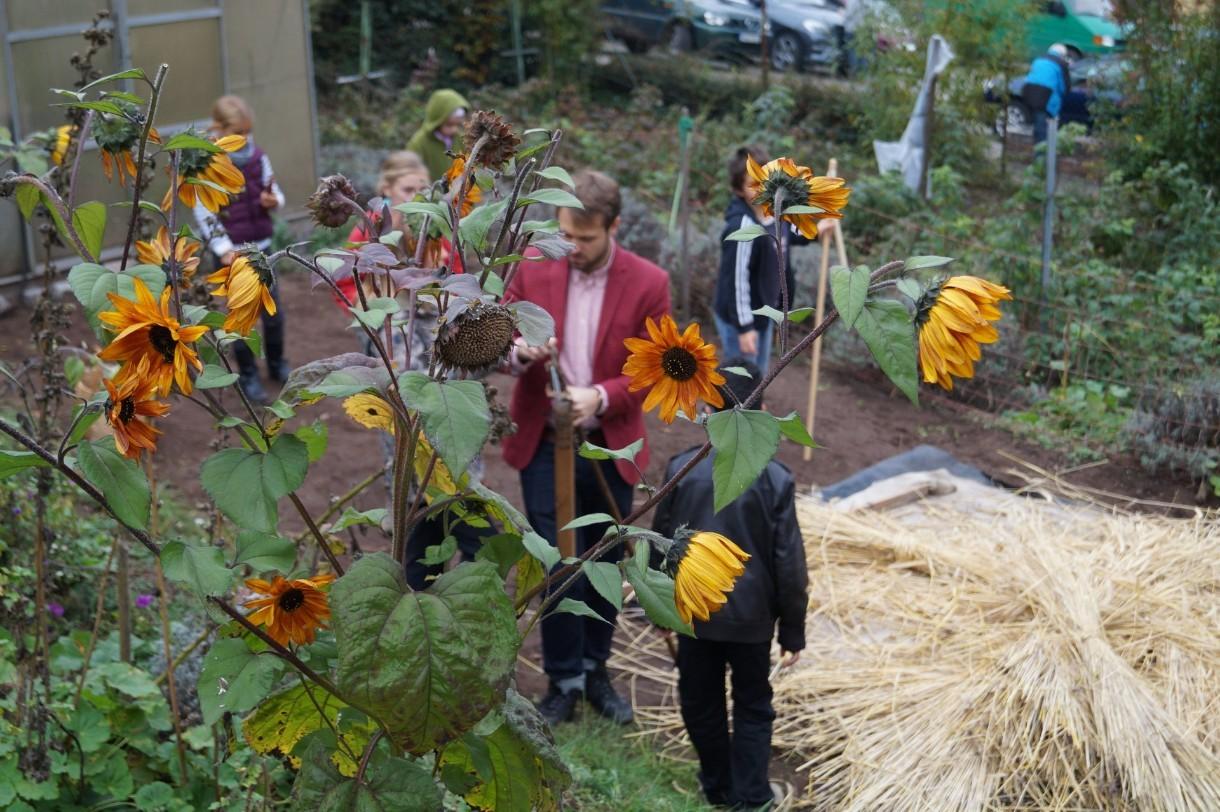 Schüler und Klassenlehrer der 4. Klasse beim Dreschen der eigenen Ernte
