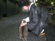 おまけの1枚。 京都嵯峨野で出会ったコも大島紬が好きらしく すり寄ってきました。
