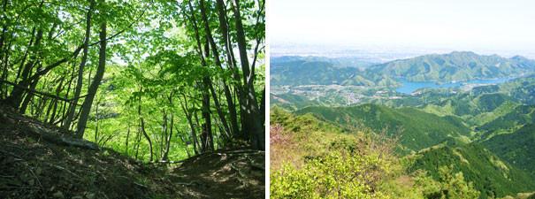 左:雨上がりの新緑 右:下界が一望