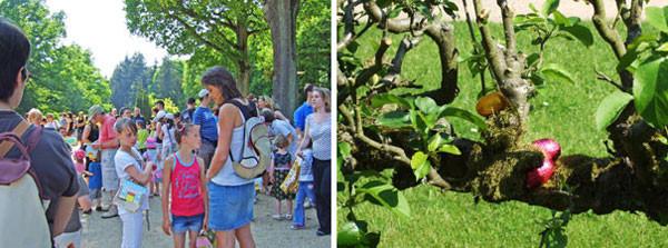 会場内で子供達は 「ヨーイ、ドン」の開始を待つ。/子供の背丈で届くリンゴの枝や根元に卵がかくされているのを発見していく。