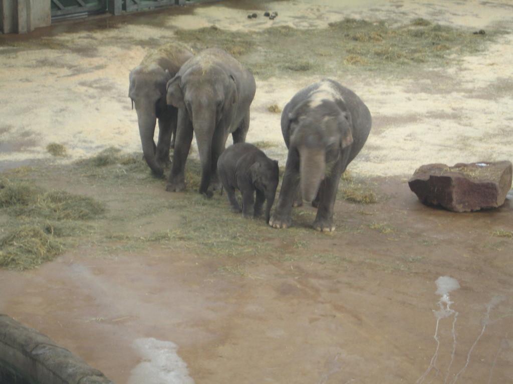 Elefantenfamilie mit Babyelefant
