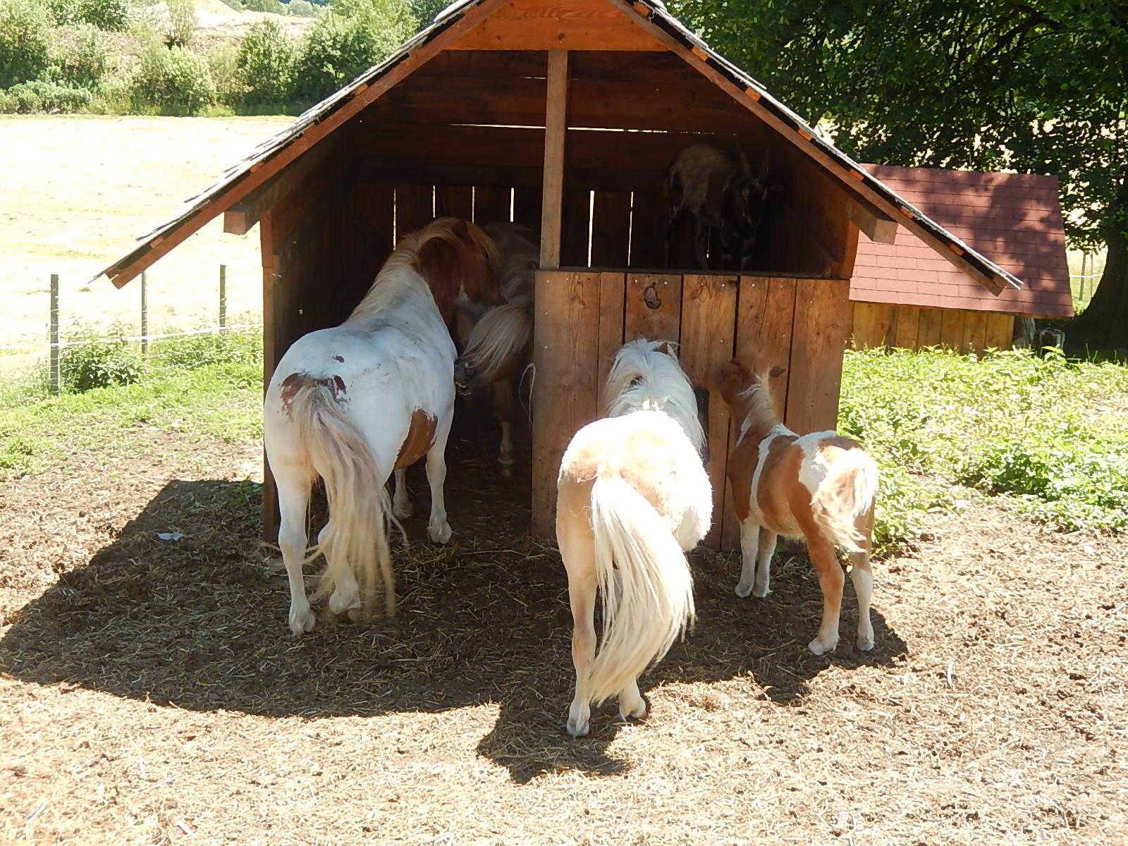 Ponyansicht von hinten