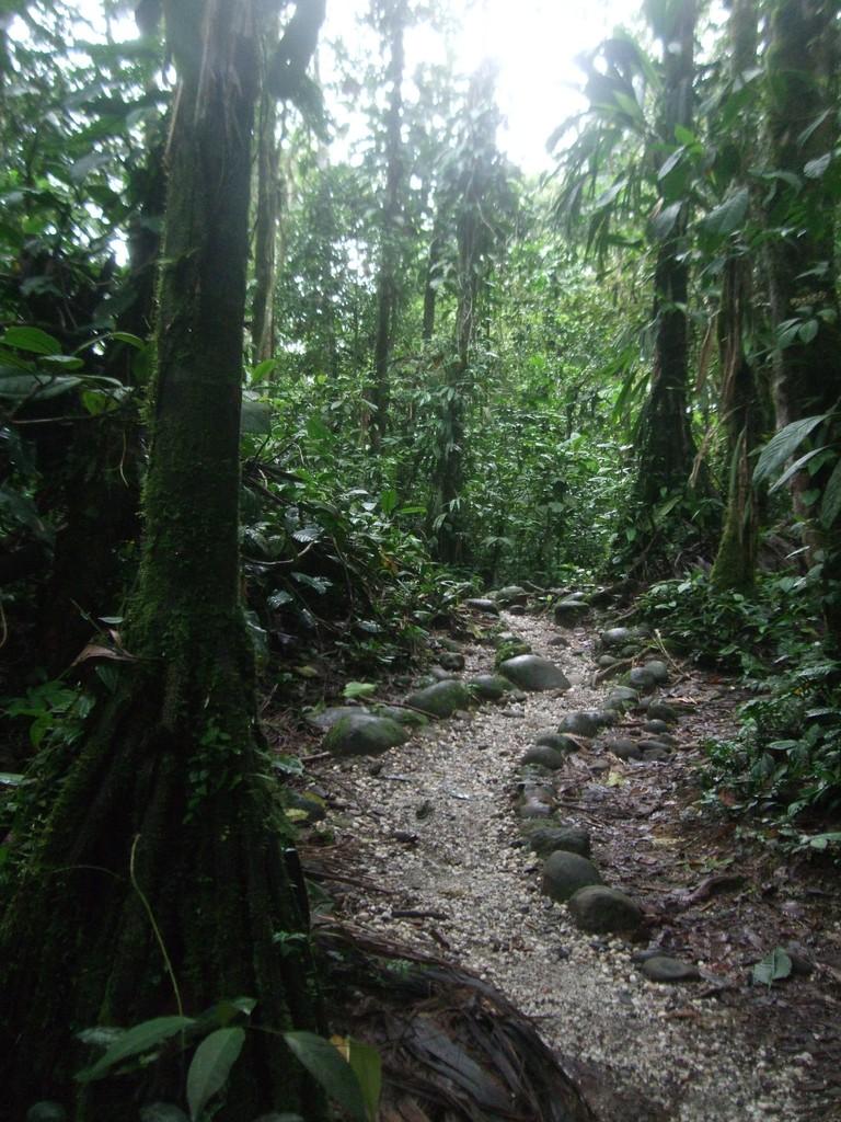 Bienvenue en dans la Haute Amazonie!!!