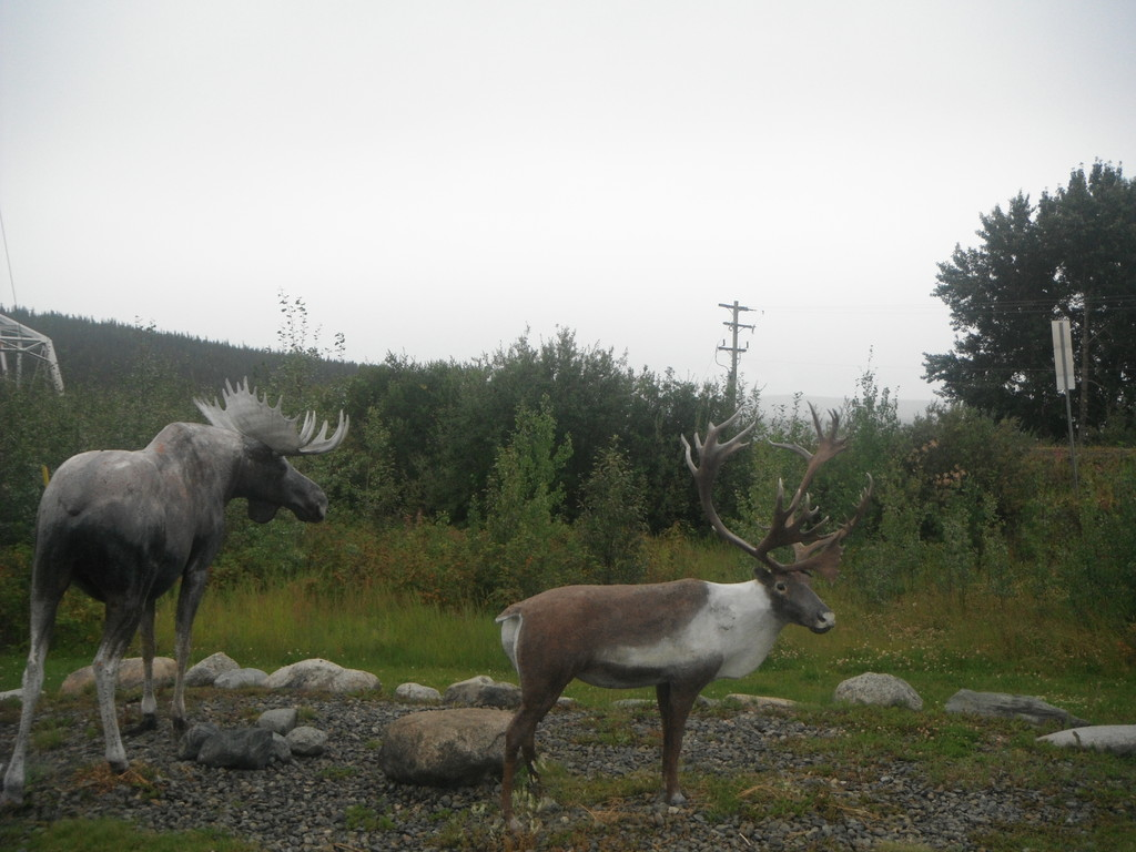 L'orignal et le caribou hou hou!!!