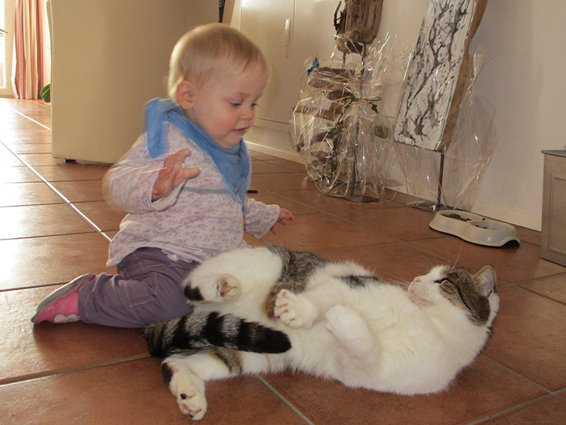 Bekanntschaft mit der Katze von Specks