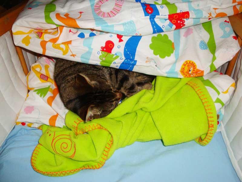 Bobbi ist gerne in meinem Bettli - obwohl er das nicht darf