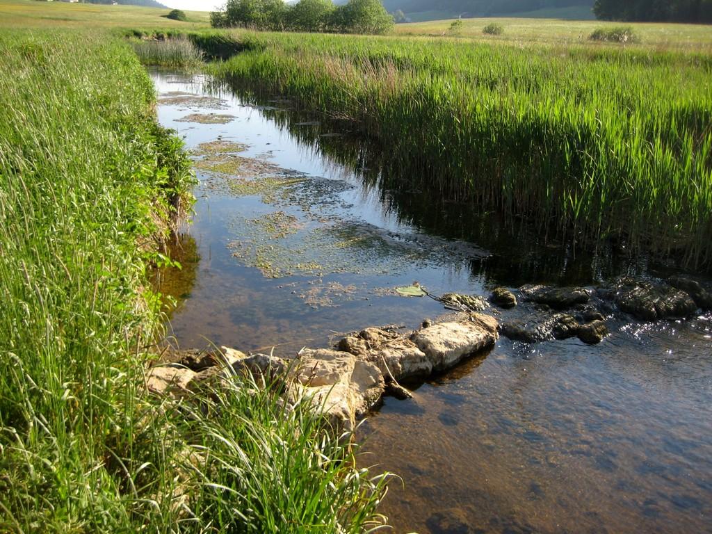 9 juin - Lieu dit le Bas-du-Chenit à 5 km de la frontière - bis