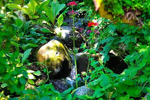 Wasserlauf hinter Pflanzen