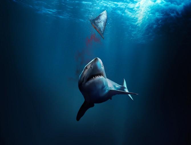 Il documentario Fin: La mattanza degli squali, su discovery+