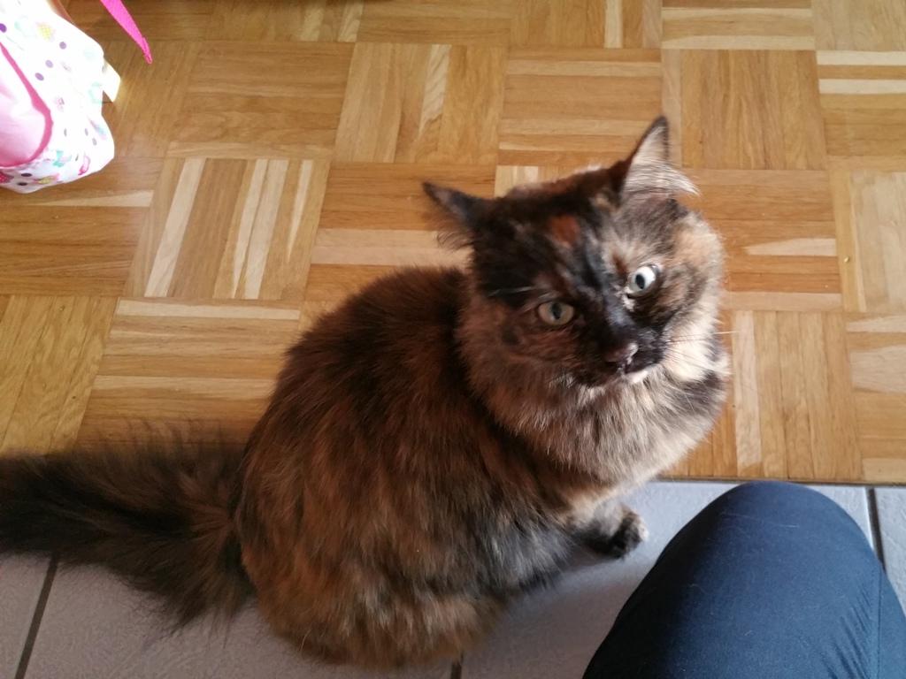 Katze Queen