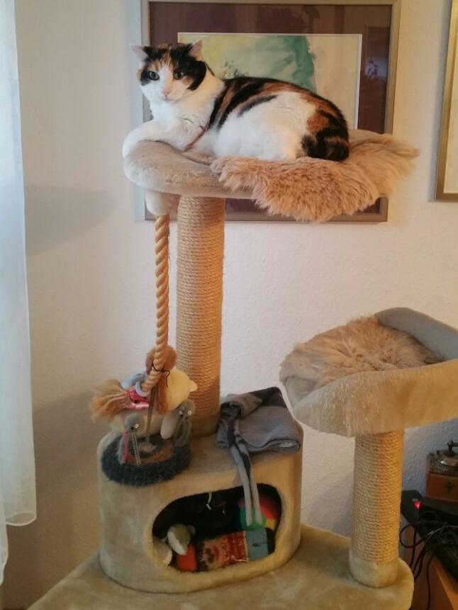 Katze Murli