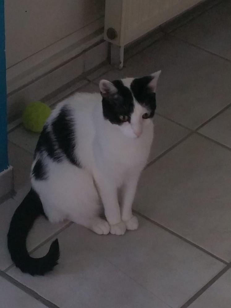 Katze Phibia