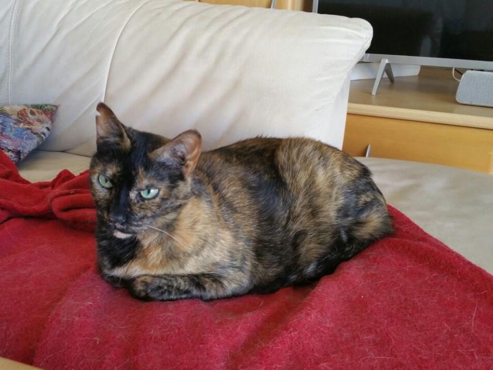 Katze Fritha