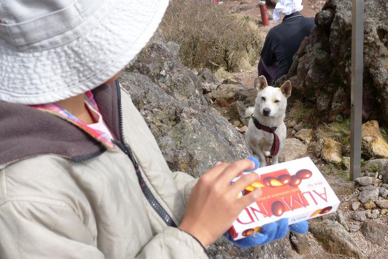 コジコ?お父さん犬? あっさり西峰へ登っていきました。
